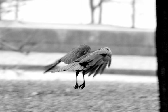 Crow Grant Park 078_1