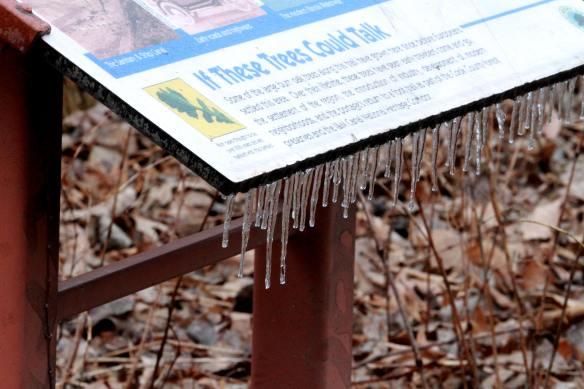 Icy Portage IMG_8797_1