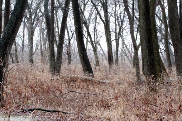 Chicago Portage trees