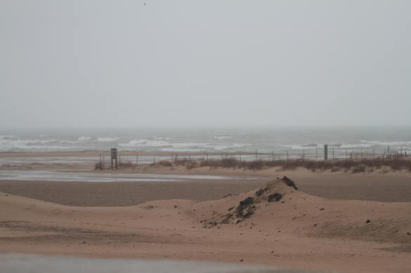 Montrose Beach IMG_9931_1