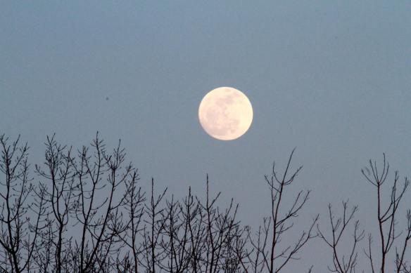 Full Moon IMG_2195_1