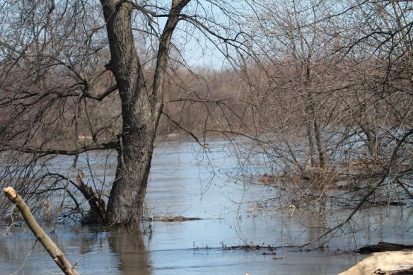 Flooding IMG_5991_1