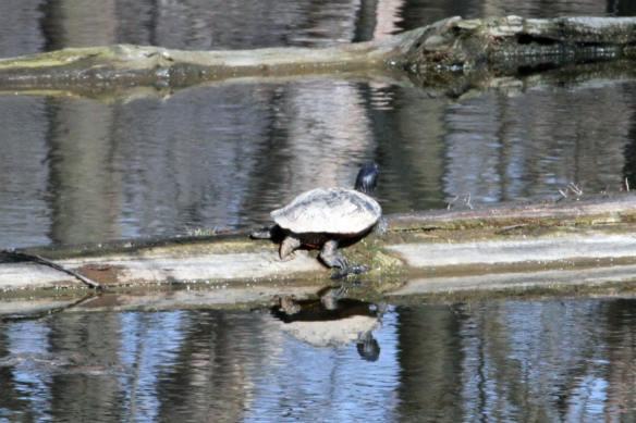Turtle IMG_4516_1
