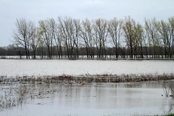 Flooding at Emiquon