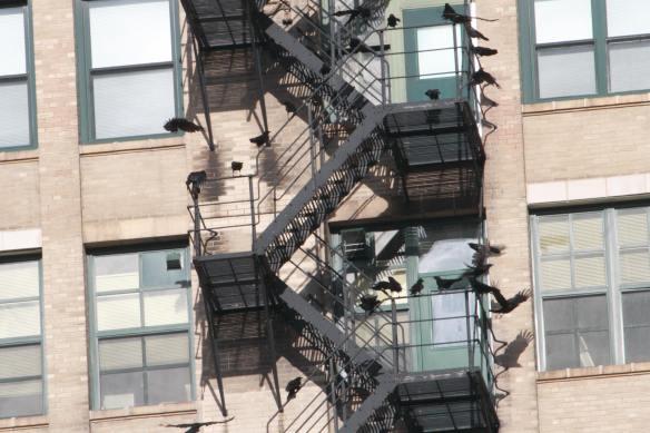 Crow Escape IMG_2046_1