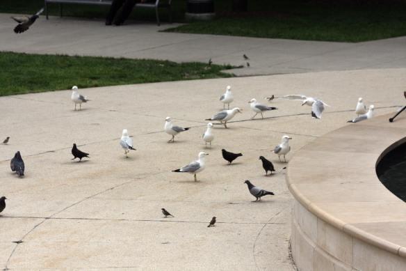 Park Birds IMG_8306_1