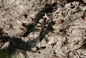 Dragonfly 1I2A1019