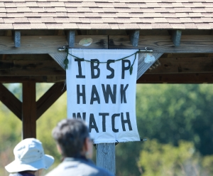 IBSP Hawk Watch 1I2A3583