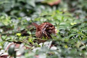 Tasty Bug 2 IMG_9673_1