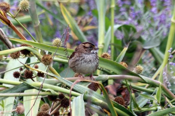 WT Sparrow IMG_9751_1