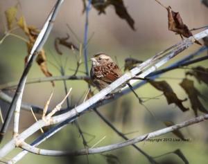 WT Sparrow Portage 1I2A4074-2