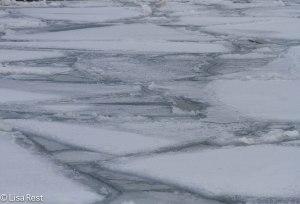 City Ice 1-17-14 3077.jpg-3077