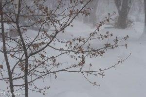 Snow Blizzard 2536.jpg-2536