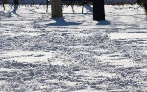 Snowtracks 1-21-14 3318.jpg-3318