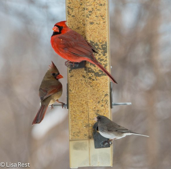 Feeder Birds at Brookfield Zoo