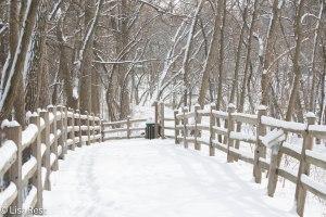 Brookfield Zoo Wilderness Trail 2-2-14 112A2110.jpg-2110