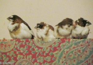 Isabella, Hector, Rikki and Phoenix