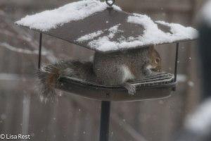 Chief Nemesis on my feeder