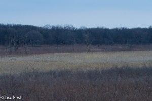 Wolf Road Prairie