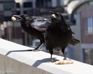 Crow LSE Park 4-22-14 8603.jpg-8603