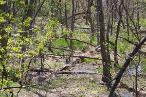 Ottawa Trail Woods