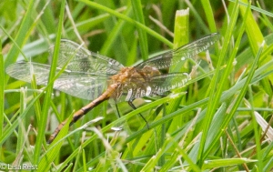 Dragonfly 6-22-14-0268