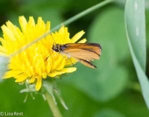 Moth 6-22-14-1913