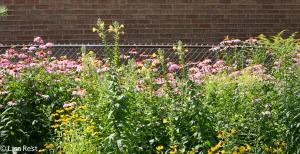 Blooms Yard 7-19-14-1566