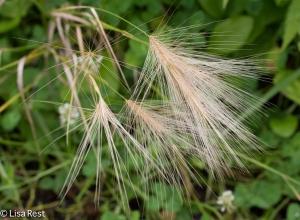 Grass 7-13-14-2712