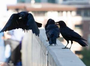 Crows LSE 9-23-14-6568
