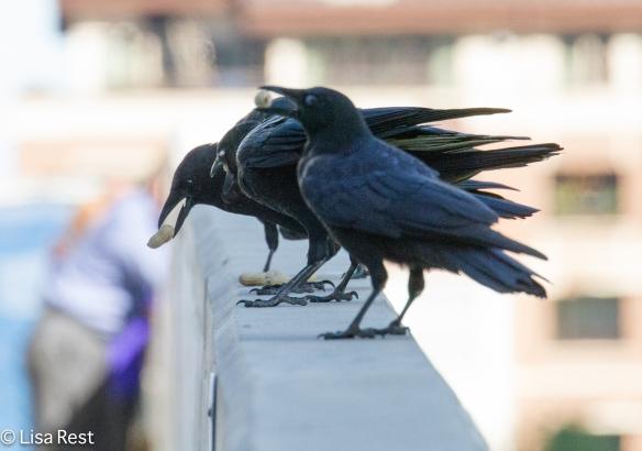 Crows LSE 9-23-14-6575