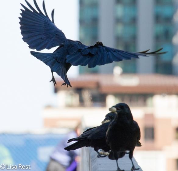Crows LSE 9-23-14-6580