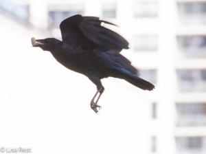Crows LSE 9-23-14-6612