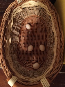 Dudlee's egg collection
