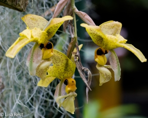 Orchid 11-14-14-0146
