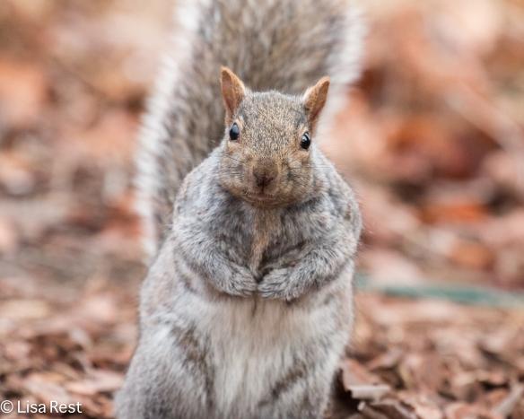 Squirrel 12-21-14-9037
