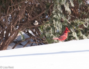 Snow Birds 1-15-15-0428