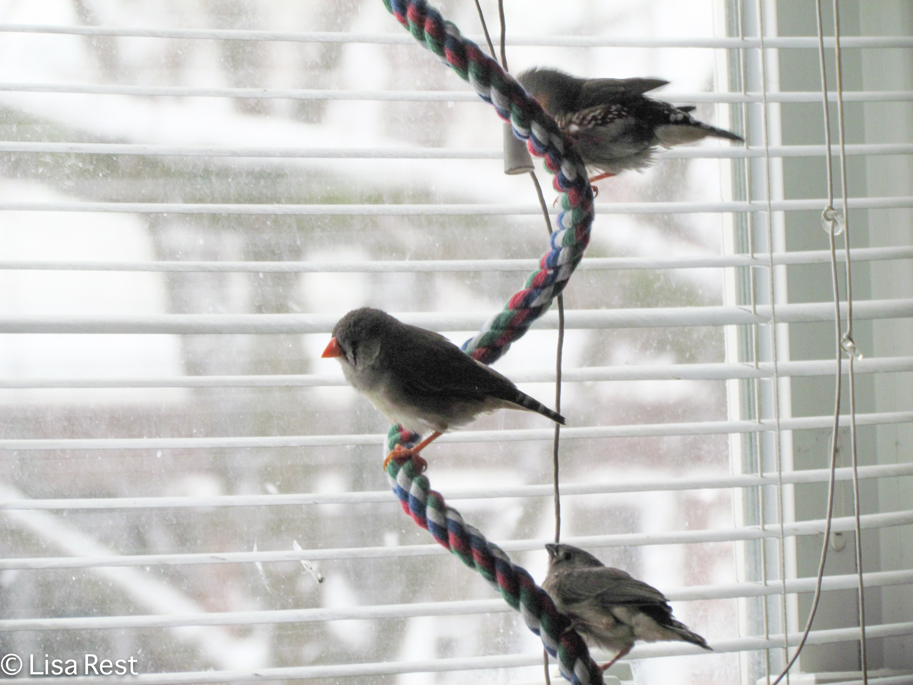 W Finch Leatherhead bird bath | Gol...