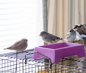 Finches watching the snow 2-15-15-3772