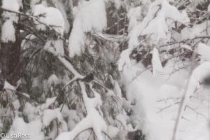 Snowbird 2-1-15-1714