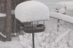 Snowbirds 2-1-15-1755