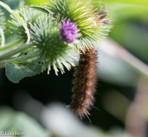 Caterpillar Portage 8-2-15-1332