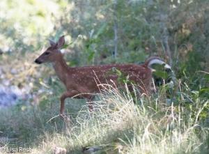 Deer Portage 8-2-15-8175