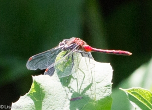 Dragonfly Portage 8-2-15-1372