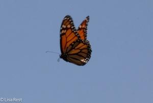 Monarch Millennium 8-11-15-8793