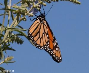 Monarch Millennium 8-11-15-8797