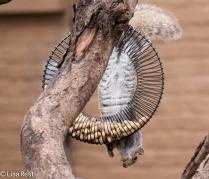 Squirrel 12-27-2015 -8587