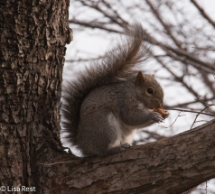 Squirrel 1-29-16-0657