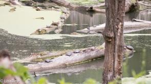 Turtles Portage 6-5-2016-2776