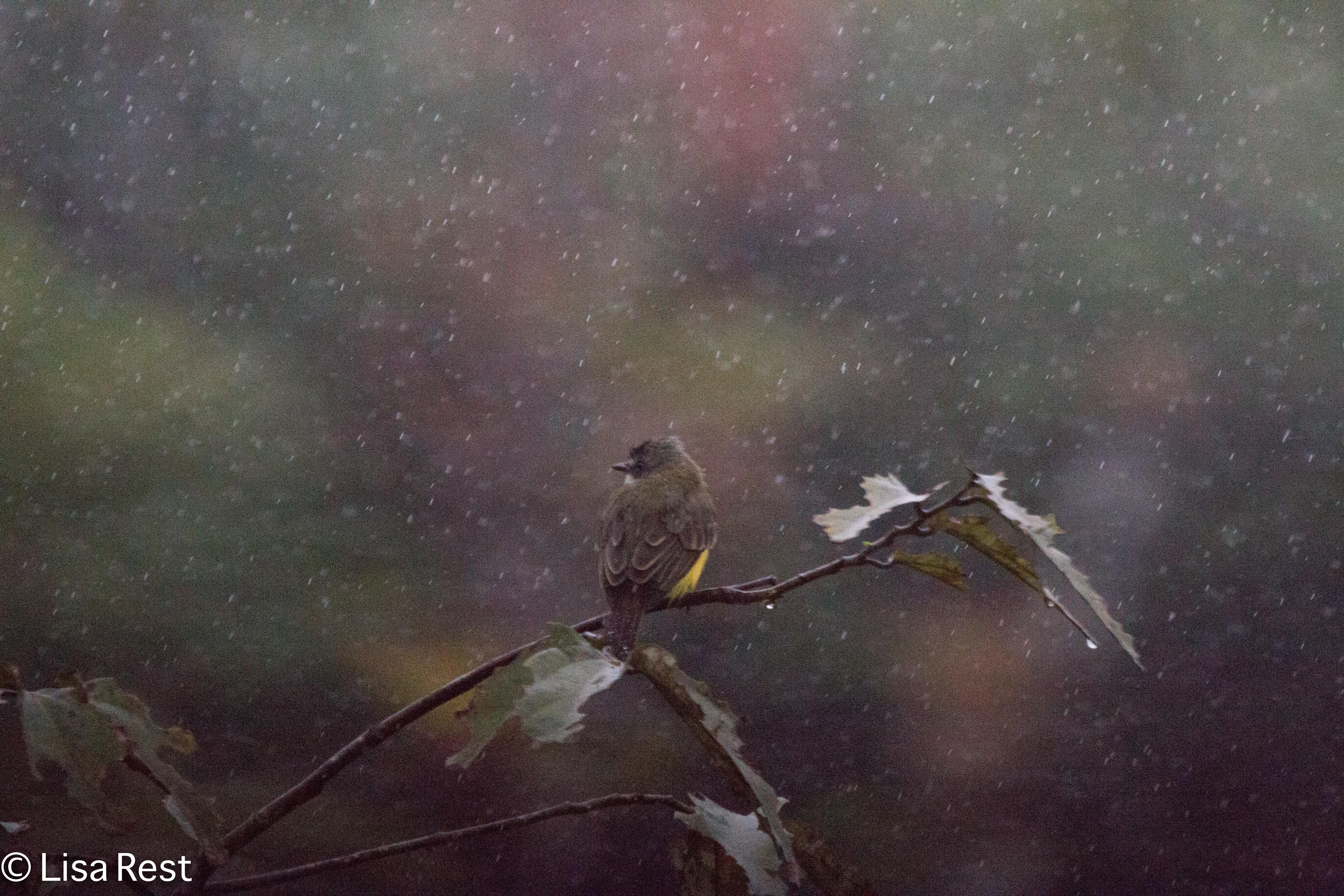 Rain at Sacha 7-3-2016-3902